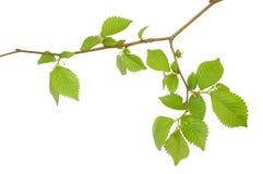 Filial de uma árvore fotos de stock