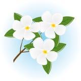 A filial de uma árvore com flores ilustração stock