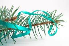 Filial de uma árvore de Natal Imagens de Stock