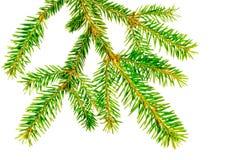 A filial de uma árvore de Natal Fotografia de Stock