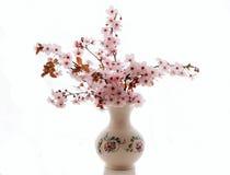 Filial de uma ameixa de florescência Fotos de Stock