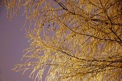 Filial do inverno foto de stock