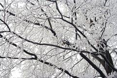 Filial do inverno Fotos de Stock Royalty Free