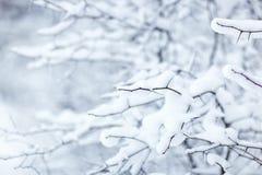 Filial do inverno com neve Imagens de Stock Royalty Free