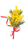 Filial do mimosa Imagem de Stock