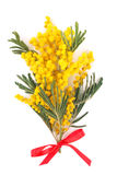 Filial do mimosa Imagens de Stock Royalty Free