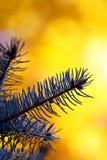 filial do pino no fundo amarelo do outono foto de stock