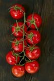 Filial dos tomates Imagem de Stock