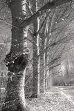 Filial e árvores em preto e branco Fotos de Stock