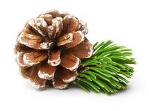 Filial e cone de árvore do pinho Imagem de Stock Royalty Free