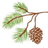 Filial e cone de árvore do pinho Imagens de Stock Royalty Free