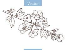Filial för blomningkvitten Hand-dragit stock illustrationer