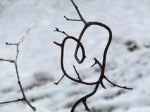 Filial för förälskelsehjärtaträd royaltyfria foton