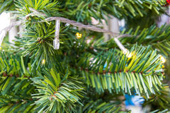 Filial för julgranträd Royaltyfri Bild
