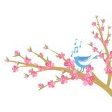 Filial för körsbärsröd blomning med fågel- och musikanmärkningar Arkivfoton