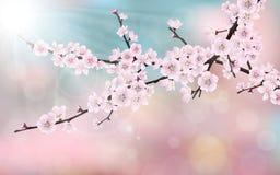 Filial för körsbärsrött träd för blomning Arkivbild