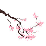 Filial för körsbärsrött träd för vårblomning Royaltyfri Foto