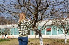 Filial för kvinnasnittfruktträd med trädgårds- sekatör Royaltyfri Fotografi