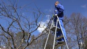 Filial för träd för arbetarmansnitt på stege i trädgård för vårtid 4K arkivfilmer