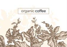 Filial för träd för kaffe för vektordiagram, blad, böna Tappning stock illustrationer
