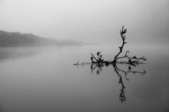 filial fallen flod Royaltyfria Foton