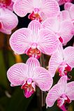 Filial fresca da flor da orquídea fotografia de stock royalty free
