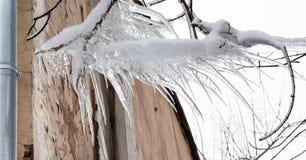 filial fryste istappar Stycken av is och istappar som hänger från träd Subfreezing väderbegrepp för vinter royaltyfri bild