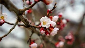 Filial i blomning arkivfoto