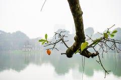 Filial i Hoan Kiem sjön Royaltyfri Foto