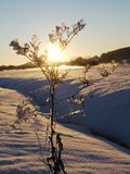 Filial i rimfrost mot himlen Royaltyfri Fotografi