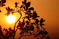 Filial i soluppgången Arkivbild