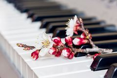 Filial med aprikosblommor på pianotangenterna Romantisk music_ arkivfoton