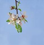 Filial med blommor Royaltyfri Bild