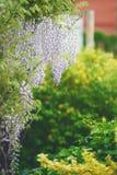 Filial med de hängande-ner blommorna royaltyfri bild