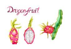 Filial med drakefrukt, hel frukt och den klippta halva skivan, hand målad vattenfärgillustration med inskriften som isoleras på v vektor illustrationer