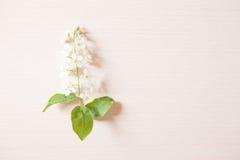 Filial med mycket små vita blommor Arkivbild