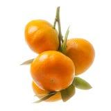 Filial med nya mogna apelsinfrukter som isoleras på den vita backgrouen Arkivbild