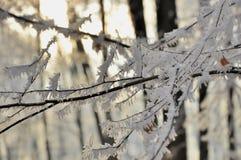 Filial med vit frost i skogen Fotografering för Bildbyråer