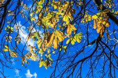 Filial- och gulingsidor i bakgrund för blå himmel arkivfoton