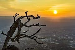 Filial och soluppgång Fotografering för Bildbyråer