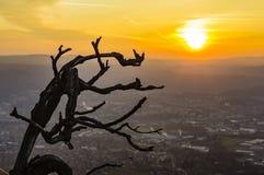 Filial och soluppgång Arkivbilder