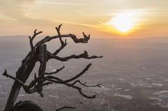 Filial och soluppgång Royaltyfri Bild