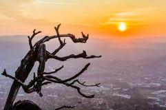 Filial och soluppgång Royaltyfri Fotografi