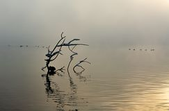 Filial och waterbird, sjö Sempach royaltyfria bilder