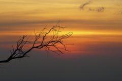 Filial på solnedgång Arkivbilder