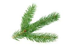 Filial pequena da pele-árvore em um fundo branco Imagens de Stock