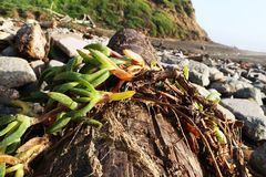 Filial som är stupad i stranden Fotografering för Bildbyråer