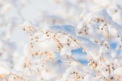 Filial under tung snö royaltyfri foto