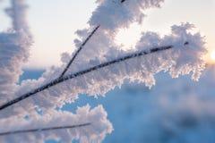 Filial under tung snö Royaltyfri Bild