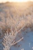 Filial under tung snö royaltyfri fotografi
